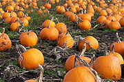 Wine Bar | 8 Pumpkin Ales for the Season