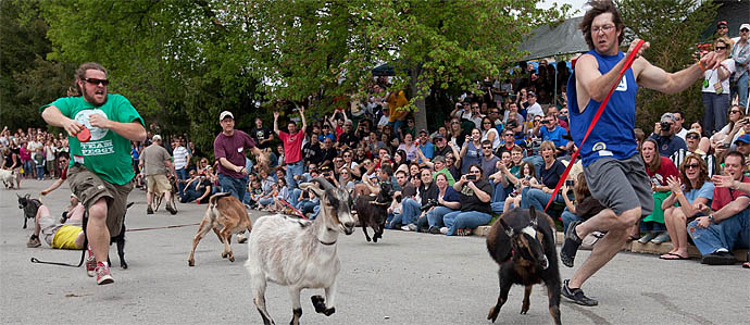 Grab Your Goat and Get to the Sly Fox Bock Fest & Goat Race, May 1