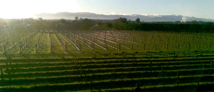 McCrossen's Hosts New Zealand Winemaker for Decibel Vintage Release Party, January 10