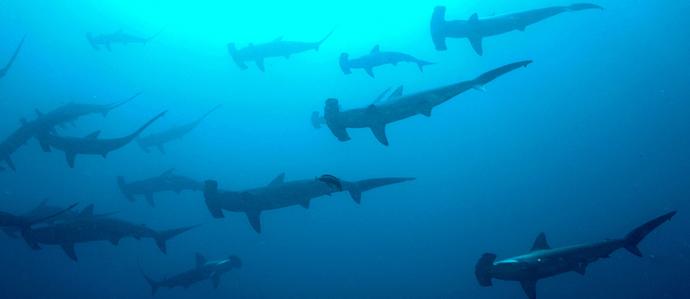 Shark Week Reels In Drink and Food Specials at Philadelphia Bars
