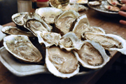 Wine Bar | Where to Find Buck-a-Shuck Oysters in Philadelphia