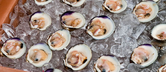 Kick Out the Clams, Mothershuckers: Allagash Clam Fest Comes to SPTR, Wed., Sept. 10