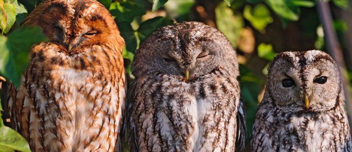 Move Over Cat Cafes, London is Getting an Owl Bar
