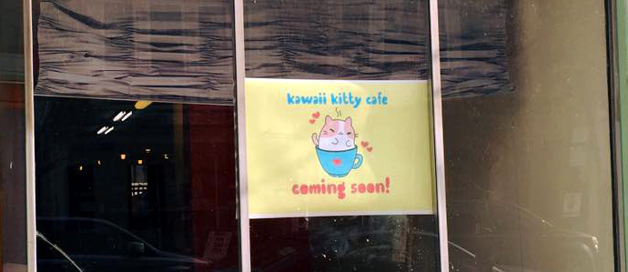 Philly's First Kitty Cafe Finds a Home in Queen Village