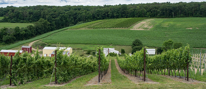 3 Lehigh Valley Wineries To Visit This Weekend