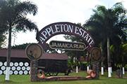 Appleton Estate Celebrates 20 Years with Joy Spence