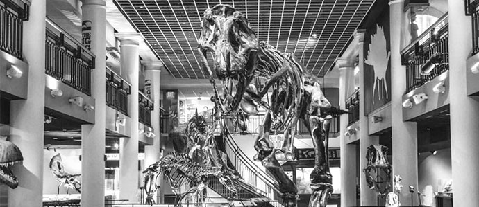 Drink with the Dinos After Hours at The Academy of Natural Sciences