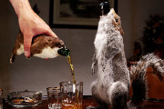Craft Beer Philadelphia | BrewDog is Releasing a $20,000 Beer Stuffed in a Taxidermied Squirrel | Drink Philly