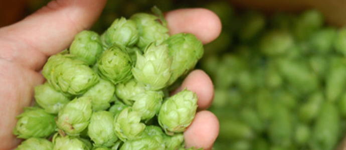 Word of the Week: Hops