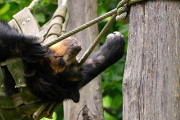 Drink With the Animals at the Philadelphia Zoo's First OktoBEARfest, September 16