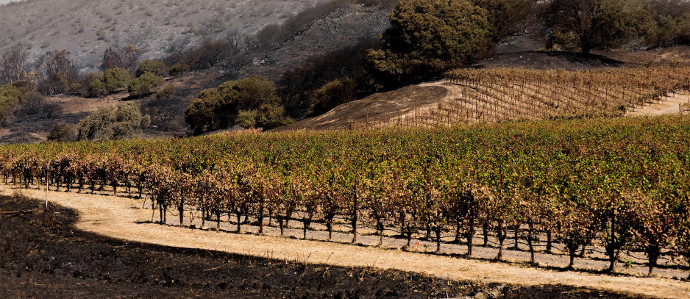 Philly Wine Week is Hosting Benefits & Fundraisers to Support California Wildfire Relief, November 6-12