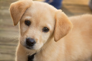 Craft Beer Philadelphia | BrewDog Announces Puppy Parental Leave for Its Employees | Drink Philly