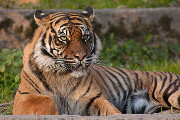 Craft Beer Philadelphia | Drink This Beer to Help Save the Tiger Population | Drink Philly