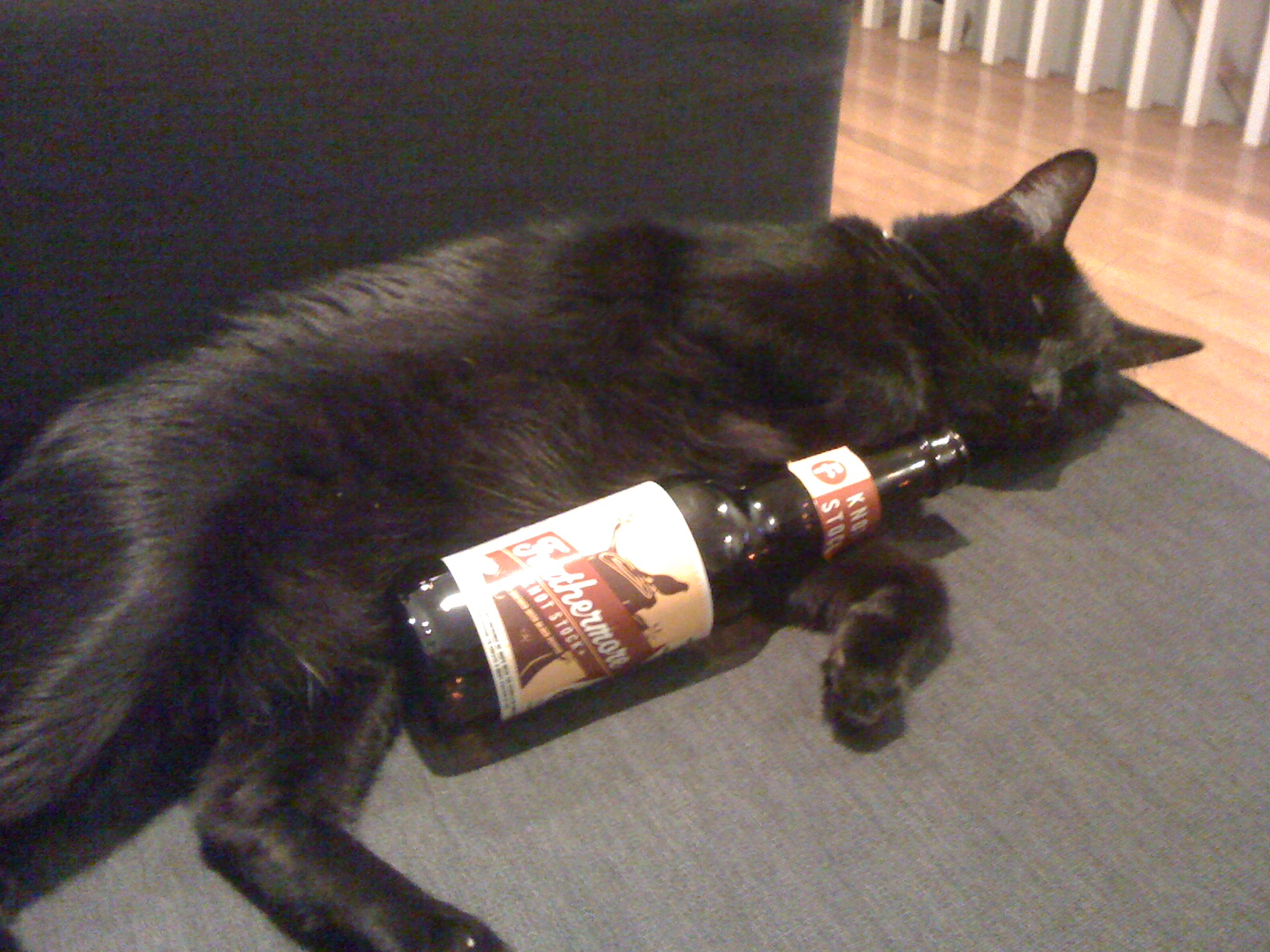 Pictures Of Cats Drinking Beer 14 Photos Drink Philly