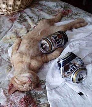 beer-cat-1.jpg